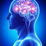 השפעה הדדית, חקר המוח וסמכות פנימית